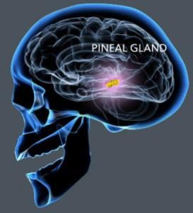 Glándula-Pineal-273x300