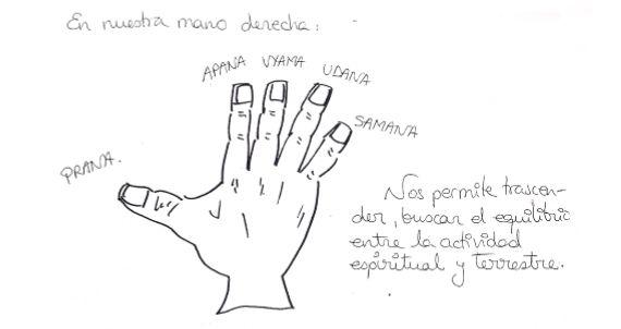 mano-derecha